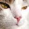 gatito gatuno