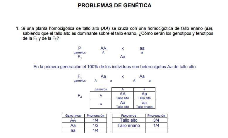 Problemas sobre Genética