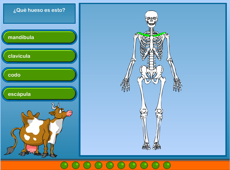 Esqueleto (ciberkidz.co) - Didactalia: material educativo