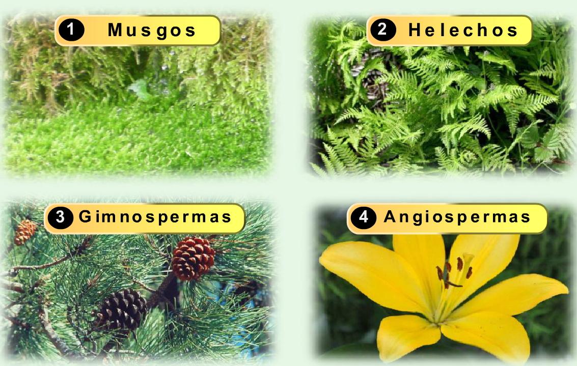 Reproducci n sexual de la plantas musgos helechos for Que son plantas ornamentales ejemplos