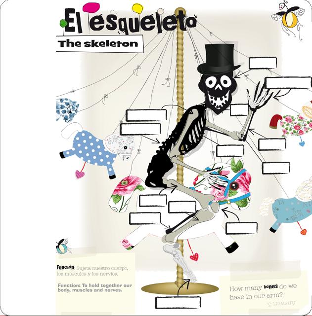 The skeleton - El esqueleto. Arrastrar y soltar (Everest ...