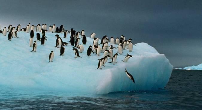 Los pingüinos 9d9c21b2-1c59-40a1-b176-3feb74876259
